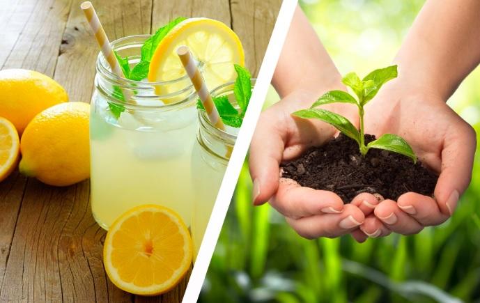 Limoni da spremere o fiori da coltivare: chi sono i nostri clienti?